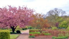 Expect something like this in a few weeks... (farmspeedracer) Tags: landscape spring frühling blossom cherry tree park germany mai may 2017 nature color bush green garden gardener soft expectation memory