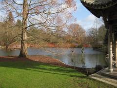 colours across lake (streetr's_flickr) Tags: rhswisley landscape garden cornus dogwood conaceae ornamentallake pagoda