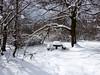 Téli pihenőhely (ossian71) Tags: magyarország hungary budaihegyseg tél winter természet nature tájkép landscape erdő forest