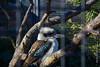 DSC_0070 (kubek013) Tags: stuttgart germany niemcy deutschland wycieczka wanderung trip sightseeing besichtigung stadt city citytour stadtrundfahrt zwiedzanie zoo wilhelma