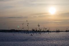 Замерзающие поля в Алёшино