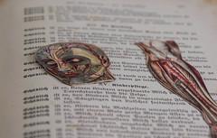 (franconiangirl) Tags: drawing anatomy anatomybook anatomiebuch ehemalig verlassen decay derelict hause wohnhaus residential urbanwandering ruraldecay buch book libro abandonado abandoned forgotten oncewashome