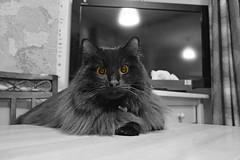 - Switch on the TV! There will be a snooker on the BBC Sport! (Caulker) Tags: cat tv kitchen table