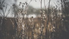 PB_012618_11 (losing.today) Tags: brianyoung oregon pacificnorthwest portland pdx portlandoregon portlandor winter nature outdoors naturepark plantlife plants moodyseason darkseason losingtoday