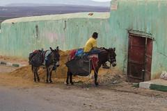 Marruecos (rosalorenzoleyva) Tags: child donkey nature photography streetphotography canon street morocco