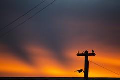 Luz (Alejandro...) Tags: atardecer cielo ocaso patagonian patagonia ushuaia argentina photography photoartist photographs photographylover photoart