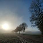 Allee im Nebel 3 - Fog avenue 3 thumbnail