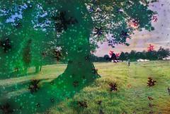 Elemental #82: Awakening (hedshot) Tags: filmsoup glow node sprite grass green figure landscape 35mm film alchemy chemistry conceptual art
