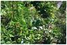 Waldgarten SF - 2 (Gerhard Martin) Tags: permakultur permaculture waldgarten waldgärten waldgärtnern garten gärten bio biobauer biogärtner bioanbau selbstgemacht selbstversorger selbstversorgung anbau gemüsebauer gemüse gemüsesorten gemüsegärtner jungesgemüse obst früchte frucht fruits fruit vegetables légumes légume vegetable nüsse nus nuss nuts noix getreide cereal organic organicfarming peasant paysant paysants peasants bauern bauer pflügen pflug pflugschar gepflügt pflüge pferd pferdestärke 1pferdestärke pferdestärken horsepower forestgardening forestgarden 3dimensionalgarden 3dimensionalergarten 3dimensionalgardens 3dimensionalegärten wildwuchs wildgärten wildgarten wildgärtnerei waldgärtnerei gärtnern