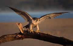 Wing Check! (E_Rick1502) Tags: