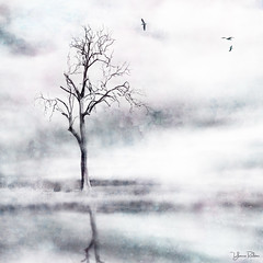 solitary . . . 2 (YvonneRaulston) Tags: tree atmospheric art australia bokeh birds creativeartphotography calm colour clouds cold country creative dream desaturated day emotive fineartgrunge fog glow impressionist impact sky lake light moody moments mist morning mysterious soft photoshopartistry peaceful reflection surreal texture trees water canon