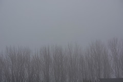 2018 - photo 051 of 365 - misty morning at home (old_hippy1948) Tags: mist