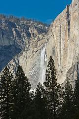 Upper Yosemite Falls from the Meadow1 (jimkerr1961) Tags: yosemitenationalpark halfdome upperyosemitefalls granite flare tunnelview