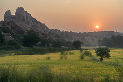 Rice fields in India (Matthieu Cneude) Tags: india mountain sunrise rice field travel nofilters hampi boulders countryside meadow