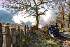 Robin and steam train (babs pix) Tags: dolgochstation robin slatefence talyllynrailway no6douglas no6douglastalyllynrailway northwales westwales gwynedd tywyngwynedd steamrailway steamtrain heritage narrowgauge narrowgaugerailway greatlittletrainsofwales