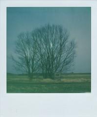 # (alex//b) Tags: 2018 polaroid sx70 polaroidoriginals instand film analog moritzburg frauenteich dresden sachsen saxony landschaft landscape baum tree teich pond