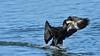 Cormorant (image 3 of 3) (Full Moon Images) Tags: rutland water wildlife trust nature reserve bird flight flying cormorant