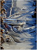 zerbrechlich-fragile (Anke knipst) Tags: eis ice weddelbrook germany winter treckerspur sonnenschein sunshine