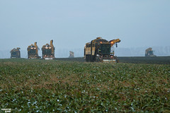 Sugar Beet Harvest   ROPA // FENDT // HAWE (martin_king.photo) Tags: sugarbeetharvestxxl sugarbeet sugarbeetharvest ropa ropatiger ropatiger6 sugarbeetharvester snow white whitefield cold coldday workeveryday tschechischerepublik powerfull martinkingphoto machines strong agricultural greatday great czechrepublic welovefarming agriculturalmachinery farm workday working modernagriculture landwirtschaft machine machinery winter winterwork sugarbeetcampaign2017 campaign sugarbeetcampaign sugar beet field