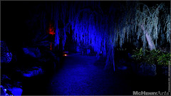 Enchanted Gardens 2017 - 191 (mchenryarts) Tags: arcen dunkelheit entertainment event events farbe fotojournalismus kasteeltuinen laternen licht lichtinszenierung lichtspektakel niederlande parkleuchten photojournalism schloessgaerten show garten laser lasershow