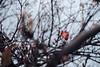 ILCE-7M2-09967-20180116-1247-HDR // Vivitar MC Close Focus Wide Angle 28mm 1:2 (Otattemita) Tags: 28mmf20 florafauna vivitar vivitarkomine vivitarmcclosefocuswideangle28mmf20 fauna flora flower nature plant wildlife vivitarmcclosefocuswideangle28mm12 sony sonyilce7m2 ilce7m2 28mm cnaturalbnatural ota