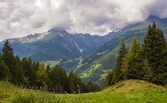 Into the Wild (Stefano Guerrini Rocco_) Tags: italy italia montagna mountain rifugio valbione colors colori natura pontedilegno nikon wild