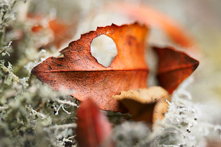 Decay - Autumn Leaf Detail