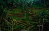 _DSC4541 (UdeshiG) Tags: bali indonesia asia waterfalls uluwatu seminyak tanahlot nikon ubud kuta paddy dogs balidogs travel traveltheworld