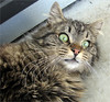 'Cubby' (Mary Faith.) Tags: 09 cubby longhair feline