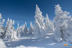 L'hiver en folie (guytarebergeron) Tags: winter canada quebec montsvalin