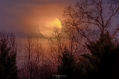 Super Blue Blood Moon (JayCaps) Tags: bloodmoon bluemoon eclipse greenville greenvillesc jaycapilo jaycapilophotography jaycaps lunareclipse moon simpsonville southcarolina superbluebloodmoon supermoon yeahthatgreenville