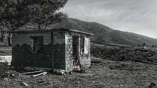 Abandoned building and the dogs