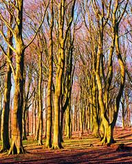 Winter colour (The_Random_Photographer) Tags: ektar kodak pentax67 75mm winter mediumformat green blue shadows