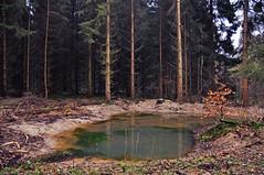 Pfütze im Wald (Uli He - Fotofee) Tags: ulrike ulrikehe uli ulihe ulrikehergert hergert nikon nikond90 fotofee wald januar winter winterbild 2018 nebelbäume nebelbaum wasser pfütze matsch