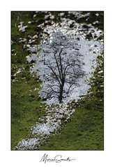 Reflectie - Reflection (Marian Smeets) Tags: stadsparksittard sittard nikond750 nederland reflection reflectie mariansmeets 2018 boom tree water gras grass limburgslandschap