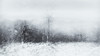 Things Fall Apart The Centre Cannot Hold (Yeats) (gerainte1) Tags: winter blackandwhite icm trees snow
