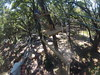 G0121258 (harleyhurricane1) Tags: line zip zipline ziplinepark dadecityflorida treehoppers centralflorida largestziplineparkincentralfl dadecity