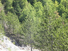 DSCN9564 (Gianluigi Roda / Photographer) Tags: apennines latesummer 2012 mountains geologicalevidences rocks trees woods landscapes