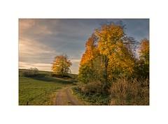 Herbstweg (linke64) Tags: thüringen natur landschaft wolken wald laub waldweg himmel herbst jahreszeiten rahmen deutschland weg bäume baum