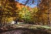 Passo dell'orso (SDB79) Tags: natura bosco foresta trekking autunno alberi val fondillo pnalm