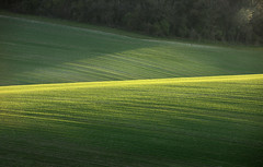 Spring Barley, South Downs (Alan MacKenzie) Tags: landscape light telephoto fields woodland southdowns shadow perspective abstract