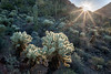 Cactus Sunrise (Kirk Lougheed) Tags: arizona pimacounty sonorandesert tucsonmountainpark usa unitedstates desert landscape outdoor sonoran