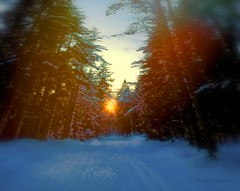 Light (evakongshavn) Tags: light winter snow art new white neige hiver hivernal blahblahscape blahblah forest foret wald dark nightshot nightscape night yello sunshine letthesunshinein sun sunset natur nature landscape landschaft paysage illusion perspective dof snowglobe tiltshift