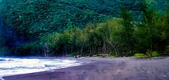 Hawaii-WaipioValley-46.jpg (Chris Finch Photography) Tags: jungle hawaiiphotography waipio taro waipiovalley hawaii landscapephotographs landscapephotography utahphotographer chrisfinch tarofarms chrisfinchphotography photographs bigisland tropical tarofarm wwwchrisfinchphotographycom valley
