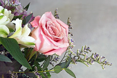 The Arrangement (tmattioni) Tags: flowers birthday february7 pink purple 7dwf flora