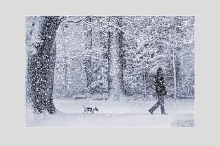 Gassigehen im Schneetreiben                       (Selenblau)