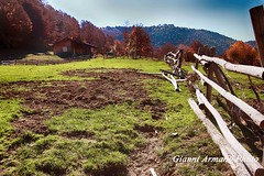 Autunno (Gianni Armano) Tags: autunno foto gianni armano photo flickr