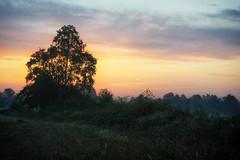 *** (pszcz9) Tags: przyroda nature natura wschódsłońca sunrise drzewo tree pejzaż landscape beautifulearth autumn jesień fall sony a77