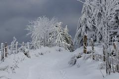 Chemin dans la neige - Way in the snow    HFF (BPBP42) Tags: fence neige snow paysage landscape landschaft