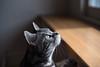 _NCL3341-Edit (chitoroid) Tags: nikond750 nikkor50mmf18g japan hokkaido sapporo cat